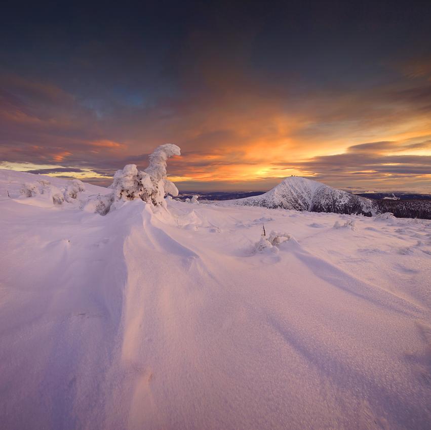 Śnieżka oglądana ze Studniční hory