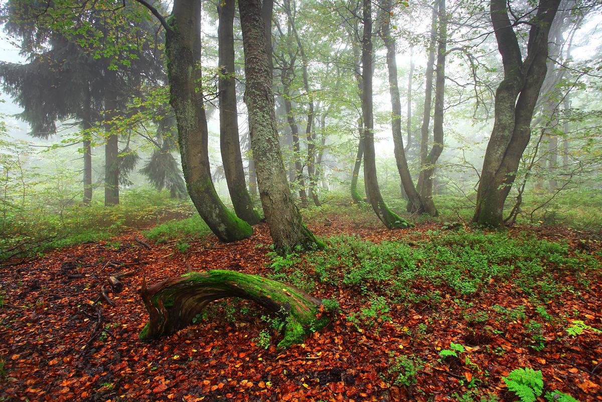 Dvorský les, Rychory